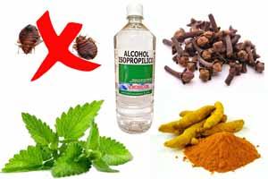 Cómo hacer veneno para chinches