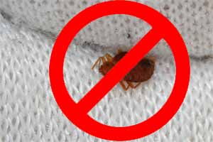 Cómo evitar y prevenir que las chinches de cama entren en casa